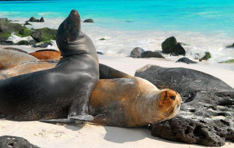 Islas Galapagos - Galapagos Islands