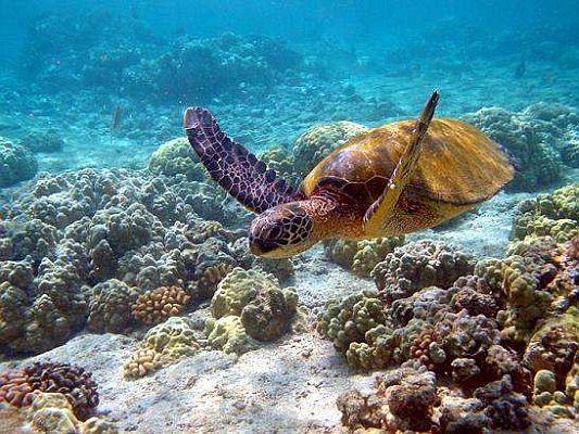 Resultado de imagen para Islas Galápagos